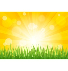 Bright sun effect with green grass field vector
