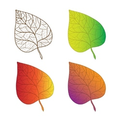 Collection colorful autumn leaves isolated vector