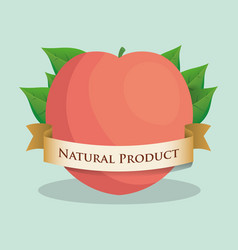 Apricot natural product leaves ribbon vector