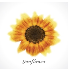 Flower sunflower vector