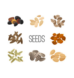 grains and seeds isolated on white background vector image vector image