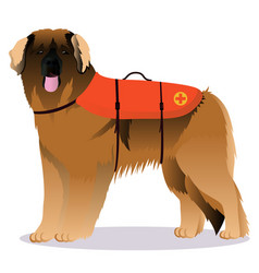 Leonberger lifesaver dog vector
