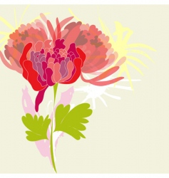 pion flower vector image