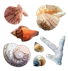 Set of sea shells and coral vector