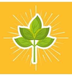Farm fresh plant icon vector