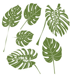 silhouette tropical monstera leaves green vector image