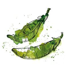 Watercolor of peas vector image