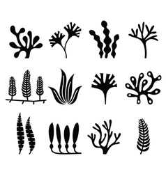 Seaweed icons set - nature food trends concept vector