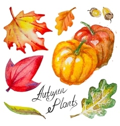 Autumn pumpkinsleaves and acorns vector