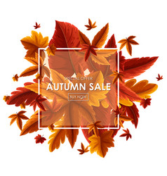 Background design for autumn sale vector