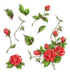 Hand drawn roses vector