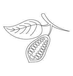 The cacao pod on a white background vector