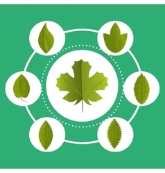 Leaf and leaves ecology graphic vector