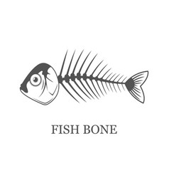 Fish bone fish skeleton grey vector