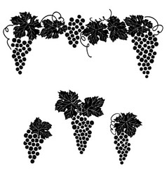 vine grape ornament element decor set vector image