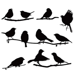 Silhouettes bird on a branch vector
