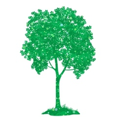Chestnut tree vector image