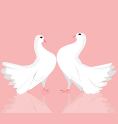 pair of white dove vector image