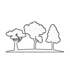 Set different tree plant forest bio botanic vector