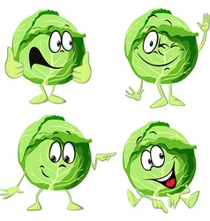 Green cabbage cartoon isolated on white background vector