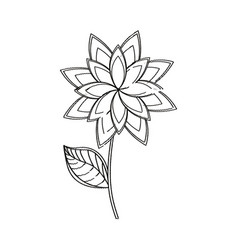 Star anice flower decoration sketch vector