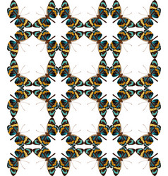Butterfly colorful geometric seamless pattern vector