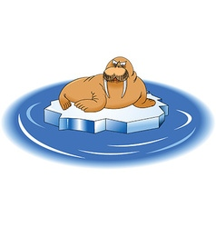 Cartoon walrus vector image vector image