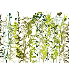 Natural wild plants and weeds vector image