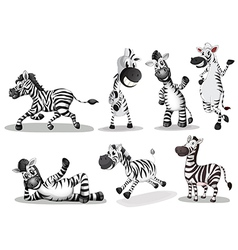 Playful zebras vector