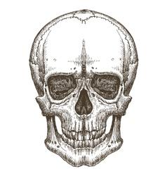 skull logo design template death disease vector image