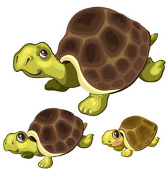 cartoon turtle on white background animals vector image vector image