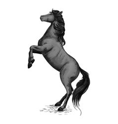 Wild horse stallion rearing in rage vector