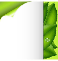 Green Leaves And Paper vector image