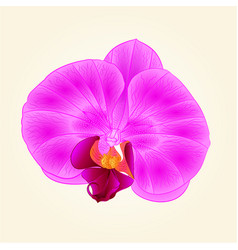 Beautiful purple orchid flower closeup isolated vector