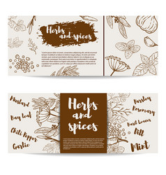 Herbs and spices design element forflyer banner vector