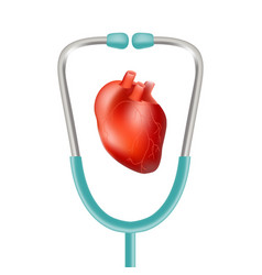 Human heart and stethoscope isolated on a white vector