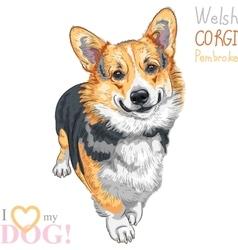 Sketch dog pembroke welsh corgi smiling vector