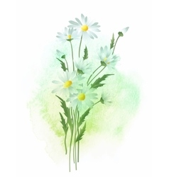 Watercolor chamomile flower vector