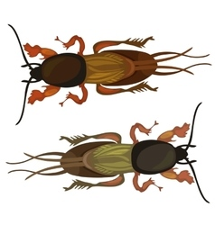 Two cockroach on white background insect vector