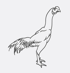 rooster sketch vector image
