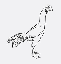 Rooster sketch vector