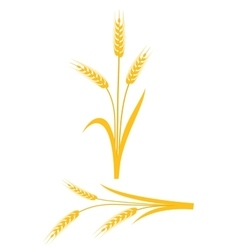 Yellow wheat ears on a white background vector