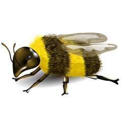 Buff tailed bumblebee vector