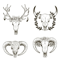 Cow skull collection vector image