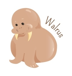 Walrus isolated on white background vector