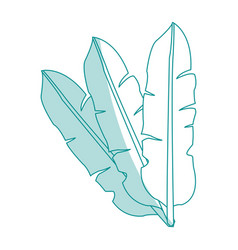 Blue silhouette image set leaves in feathers shape vector