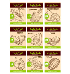price card sketch of tropical exotic fruits vector image vector image
