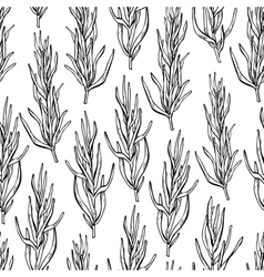 Rosemary drawing seamless pattern Isolated vector image