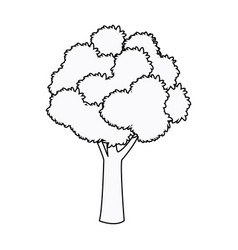 Tree foliage woody stem branching plant outline vector