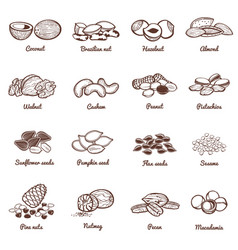 Edible nuts and seeds icons protein vector
